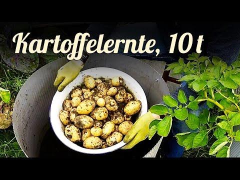 Kartoffeln anbauen | Pflanzen | 10 Tonnen Kartoffelernte | Teil 4/4 | Serbstversorgung