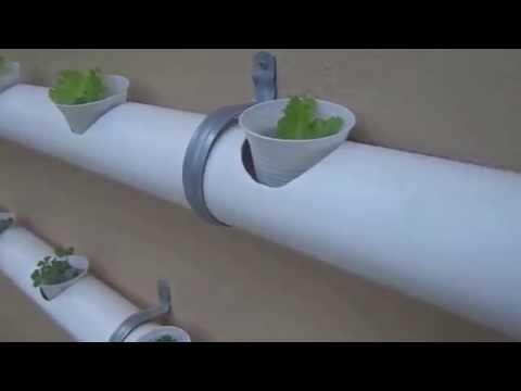 video 1 Hidroponia veja como é fácil cultivar em casa. comente o video