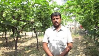 Solapur Shivaji dattatray jadhav