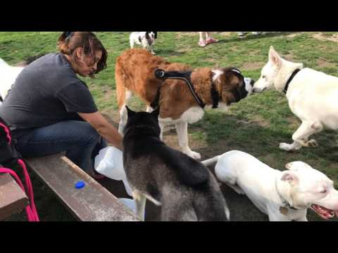 The Portage Dog Park is a Great Place for Dogs!