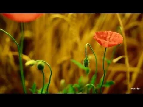 Video RETOÑO MIO ( Snatam Kaur )  Esta Es La Bendición De Tu Madre download in MP3, 3GP, MP4, WEBM, AVI, FLV January 2017