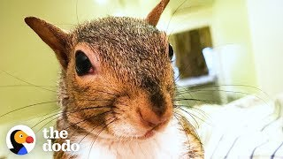 This Rescued Squirrel Is The Ultimate Diva | The Dodo by The Dodo