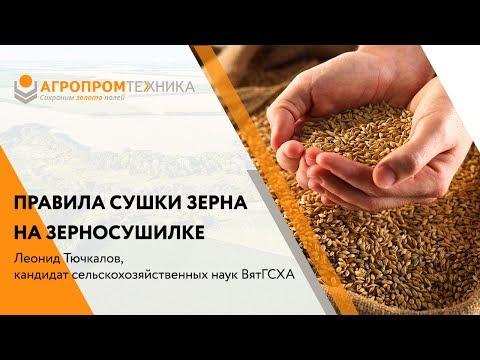 Правила сушки зерна на зерносушилке по мнению экспертов
