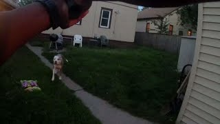 """Minneapolis police released graphic body cam footage of an officer shooting two dogs. CBS Minnesota reports.Subscribe to the """"CBSN"""" Channel HERE: http://bit.ly/1Re2MgSWatch """"CBSN"""" live HERE: http://cbsn.ws/1PlLpZ7Follow """"CBSN"""" on Instagram HERE: http://bit.ly/1PO0dkxLike """"CBSN"""" on Facebook HERE: http://on.fb.me/1o3Deb4Follow """"CBSN"""" on Twitter HERE: http://bit.ly/1V4qhIuGet the latest news and best in original reporting from CBS News delivered to your inbox. Subscribe to newsletters HERE: http://cbsn.ws/1RqHw7TGet your news on the go! Download CBS News mobile apps HERE: http://cbsn.ws/1Xb1WC8Get new episodes of shows you love across devices the next day, stream local news live, and watch full seasons of CBS fan favorites anytime, anywhere with CBS All Access. Try it free! http://bit.ly/1OQA29B---CBSN is the first digital streaming news network that will allow Internet-connected consumers to watch live, anchored news coverage on their connected TV and other devices. At launch, the network is available 24/7 and makes all of the resources of CBS News available directly on digital platforms with live, anchored coverage 15 hours each weekday. CBSN. Always On."""