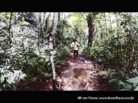 BRemFlores - Chapada dos Veadeiros