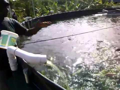 attenzione! questo pesce non andrebbe consumato.