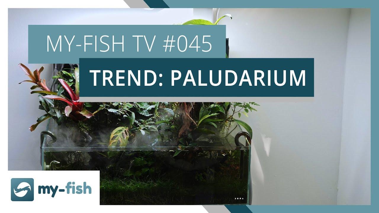 my-fish TV - Deine Nr. 1 Anlaufstelle für alle Themen rund um die Aquaristik 19