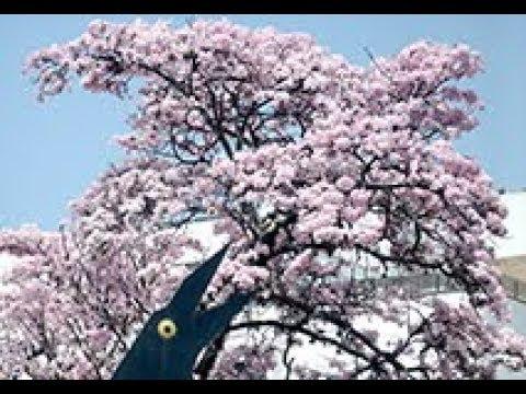 Imagenes para enamorar - Cali florece: imágenes para enamorarse de los colores de nuestras flores