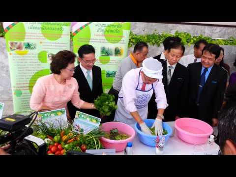 ล้างผักปลอดสารพิษ พิชิตมะเร็งเต้านม