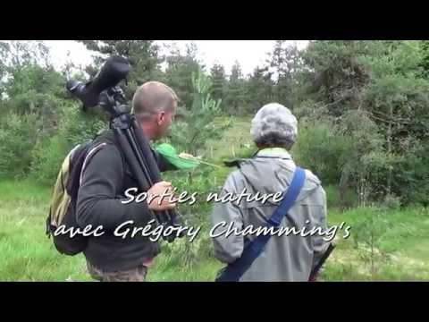 margeride - Dans le cadre des mercredis nature et des week-ends nature organisés par les offices de tourisme de Langogne, Grandrieu et Châteauneuf de Randon, Grégory Cha...