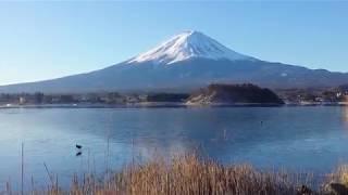 冬限定!湖の上を歩く鳥ちゃん♪