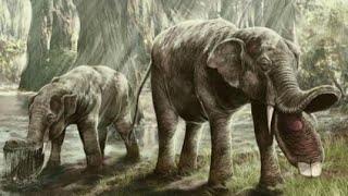 Video 10 Nightmarish Animals you will be Happy are Extinct MP3, 3GP, MP4, WEBM, AVI, FLV Januari 2019