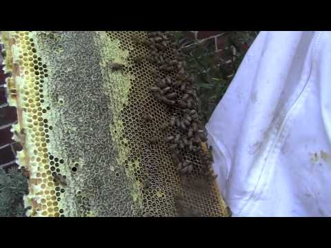 2012 Jan 27 Melbourne CBD Apiary Movie 1