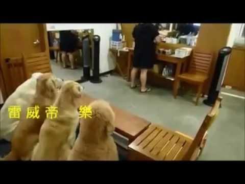 الكلاب في كوكب اليابان الشقيق شاهد كيف تأكل