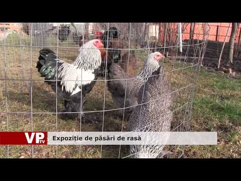 Expoziție de păsări de rasă