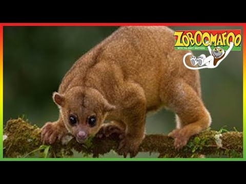 🐒 Zoboomafoo 257 | Super Claw | Animal shows for kids | Full Episodes | HD 🐒