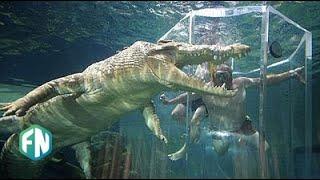 Video Awas Dimakan Buaya!! 5 kolam renang Paling Berbahaya Di Dunia MP3, 3GP, MP4, WEBM, AVI, FLV Januari 2018