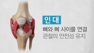 <b>관절</b>이 보내는 경고, 무릎 통증 미리보기 썸네일