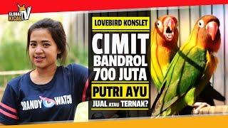 BUKAN LIPSING :  Lovebird Cimit Bandrol 700 Juta KONSLET, PUTRI AYU Pilih Dijual Atau Ternak?