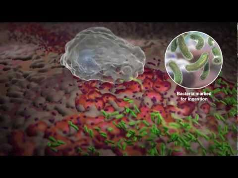 how to boost white blood cells