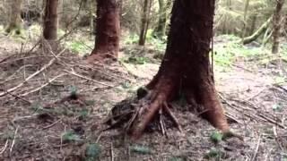 More Kundalini Grounding