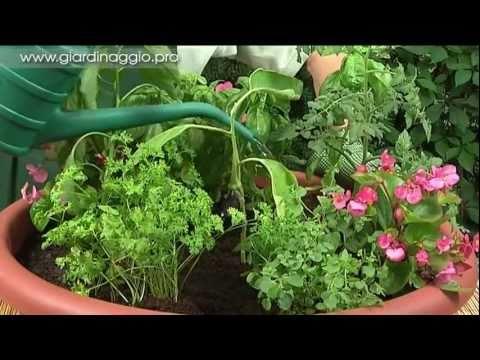 Verdure e profumi in un piccolo vaso