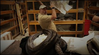 Jay preforms snake MAGIC!! How many eggs?? by Prehistoric Pets TV