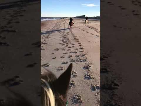 Amelia Island Horseback Riding is Amazing!