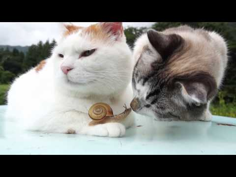 When A Snail Loves Two Cats And Two Cats Love A Snail