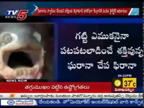 Dangerous Fish Piranha Found in Godavari | Piranha Threat to Fishes & Humans