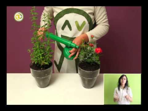 Fundación Que Transforma  - Plantas protectoras