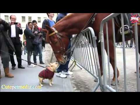 Download FUNNY HORSES ★ Funny Horse Videos [Funny Pets] HD Mp4 3GP Video and MP3