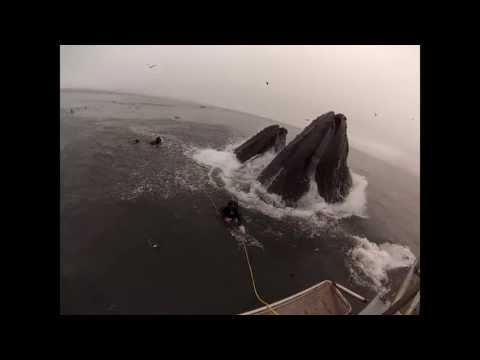 Divers run for their lives after almost being swallowed by whales. Their reaction is priceless