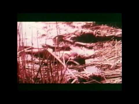 Africa: Blood and Guts (1966) - Trailer
