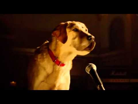 Bob Marley And Me Beverly Hills Chihuahua 3