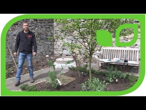 Ippenburger Gartentipps: Wieviel Langzeitdünger muss ich bei der Pflanzung dazugeben?