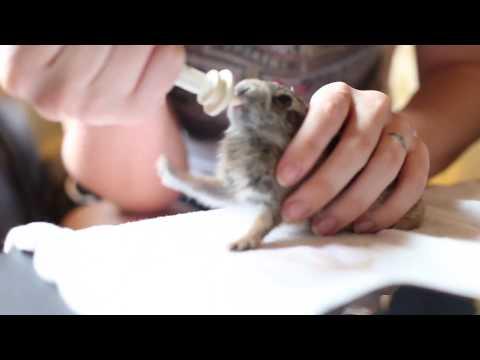Süt İçerken Sevimlilik Patlaması Yaşayan Yavru Tavşan