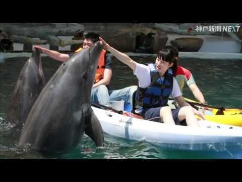 カヌーでイルカと遊ぶ