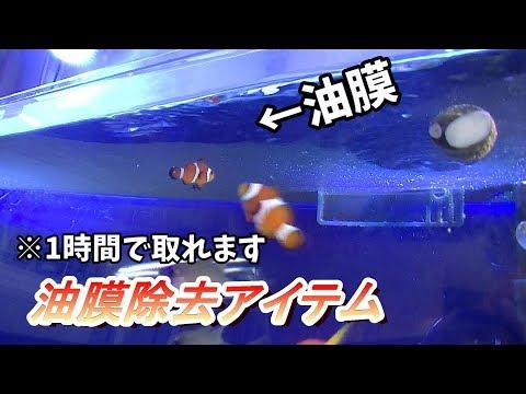 【海水水槽】油膜に困ったときに使うならコレッ!