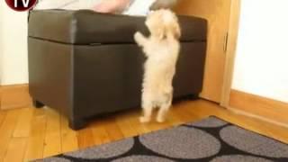 Sevimli köpek zıplıyor