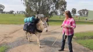 Corowa Australia  city pictures gallery : Donkey trekking - Murray River Corowa NSW Australia, and video on this easy to use pack saddle