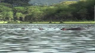 Naivasha Kenya  city images : Around the lake Naivasha (Kenya)