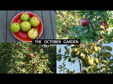 The California Garden In October - Harvests & Fall Garden Preparation Guide