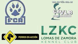 """Nonton """"Perros en acción"""" Lomas de Zamora Kennel Club Cámara 1 - Día Viernes Film Subtitle Indonesia Streaming Movie Download"""