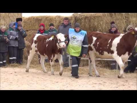 """Региональная выставка племенного молочного скота """"Наша порода"""""""
