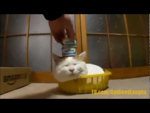Hilarious Cat videos! Cute, Funny and Adorable Cats!! | WEEKLY COMPILATION | GGL