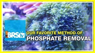 What are some great ways to reduce phosphates in the reef aquarium? | 52 FAQ