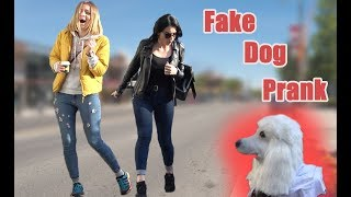Video FAKE DOG SCARE PRANK | AWESOME REACTIONS MP3, 3GP, MP4, WEBM, AVI, FLV April 2019