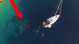 Video 10 Sea Monsters ATTACKING A Boat! MP3, 3GP, MP4, WEBM, AVI, FLV Januari 2019