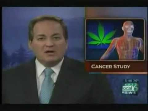 Dosage of Cannabis Oil Required to get Cured – Rick Simpson's Hemp Oil